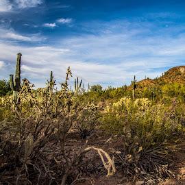 Sonora Desert by Christina Heinle - Landscapes Deserts ( desert, sahuaro, arizona, desert botanical gardens, phoenix, cactus )