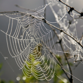 Delicate Artwork by David Nelson - Nature Up Close Webs ( delicate artwork.,  )