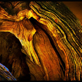 Lighting up a tree log.... by Amanda Coertze - Nature Up Close Trees & Bushes ( Lighting, moods, mood lighting )