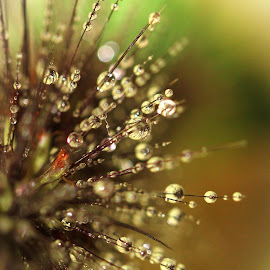 View from the Top by Janet Herman - Abstract Macro ( grasses, macro, spray, nature, grass, bloom, sparkle, waterdrops )