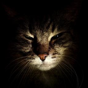 *** by Jurijs Ratanins - Instagram & Mobile Other ( mobilography, cat, portrait )