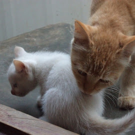 by Azad Kamil - Animals - Cats Playing ( kitten, cat, mother, nature, pet, play, lovely, animal )