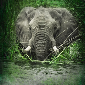 Elephant Crossing Textured by Gary Want - Digital Art Animals ( okavango delta, botswana, lagoon, elephant, safari, africa, #wildlife, #locations )