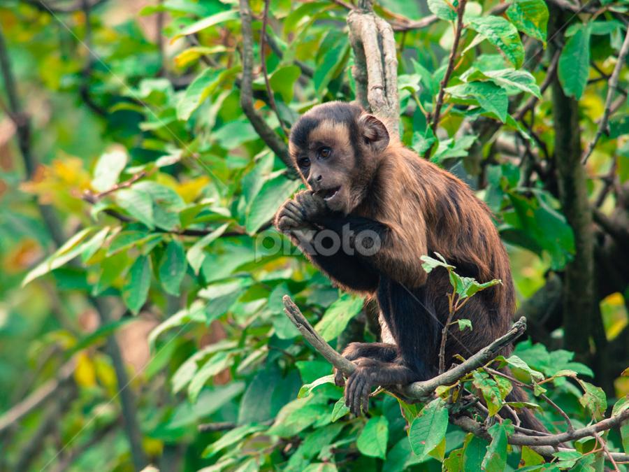 Lil' monkey by Darko D. - Animals Other Mammals ( monkey, mammal, animal, zoo, jungle, brown, wildlife, little )