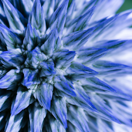 blue by Darren Sutherland - Abstract Macro ( butcharts, flower )
