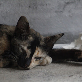 Slept by Andyantama Tinggar Sanyoto Putro - Animals - Cats Kittens