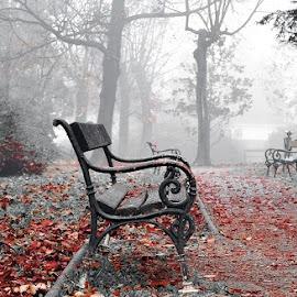by Manuela Dedić - City,  Street & Park  City Parks (  )