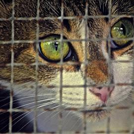 Lost freedom  by Silvia Mininni - Animals - Cats Kittens (  )