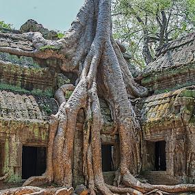 Ta Prohm by Vibeke Friis - Nature Up Close Trees & Bushes ( ancient, tree, seim reap, jungle, ta prohm, ruins, angkor wat, cambodia,  )