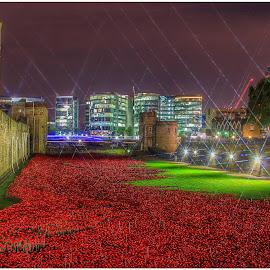 Tower Of London Poppies by Nachau Kirwan - City,  Street & Park  Historic Districts ( lights, red, london, grass, green, tower bridge, poppies, Urban, City, Lifestyle )