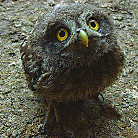 by George Ilic - Animals Birds