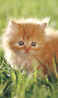 Screenshot of Cute Orange Kitty
