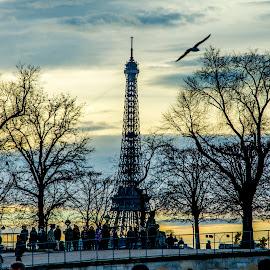 Paris by Youssef Lahlou - Buildings & Architecture Statues & Monuments ( eiffel tower, paris, sky, sunset, trees, monument, light )