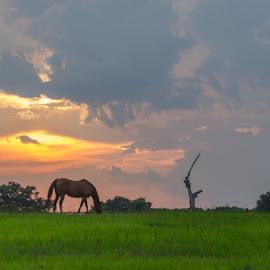 untitled by David Ubach - Landscapes Prairies, Meadows & Fields ( farm, field, pasture, sunset, horse, farmland )