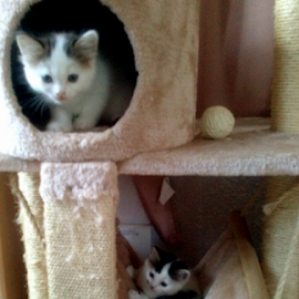 This is fun! by Lyz Amer - Animals - Cats Kittens ( kittens )