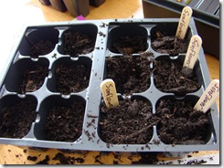 planting 010