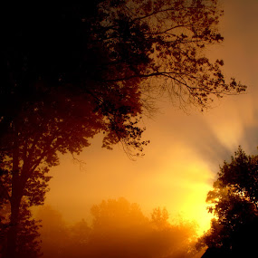 Sun Set Fogg by Larry Bidwell - Landscapes Sunsets & Sunrises (  )