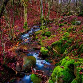 by Mikael Svensson - Landscapes Forests (  )