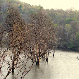Nature by Yallappagouda Patil - Landscapes Forests