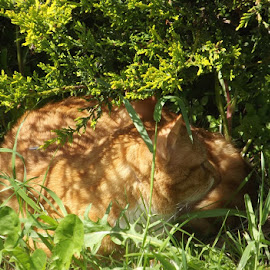 resting by Danny Fowler - Animals - Cats Playing ( uk, resting, cat, sunny, shade )