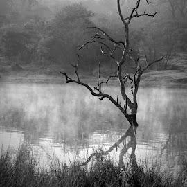 Misty Morning! by Anthony Goldman - Black & White Landscapes ( water, reflection ulusaba, tree, nature, fog, dam, landscape, mist,  )