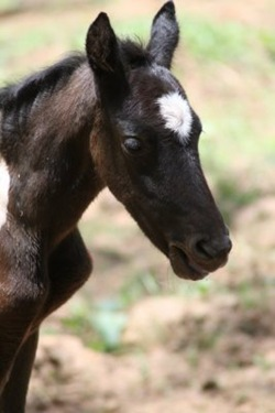 new filly2