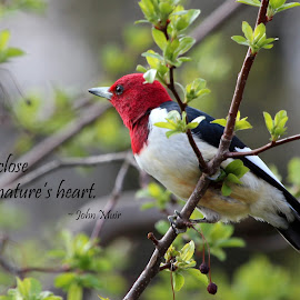 Keep close to nature's heart by Lorri Nussbaum - Typography Quotes & Sentences ( bird, read-headed, heart, tree, nature, quote, branch, woodpecker )