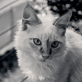 by Gabriela Cozma - Animals - Cats Portraits