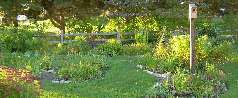 Garden for Oct 4 08 (3) - Copy