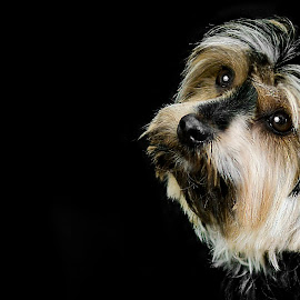 Happy National Puppy Day by Chantelle Heiskell - Animals - Dogs Portraits ( studio, pet portrait, dogs, puppy, puppy portrait )