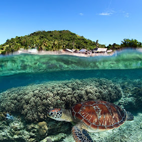 Along the shore by Andrey Narchuk - Animals Sea Creatures ( wild, coral, nature, underwater, swim, tropical, sea, diving, turtle )