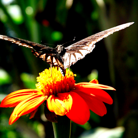 butterfly by Amal Vs - Flowers Flower Gardens ( butterfly, dalia, red, fly, green, bloom, honry )