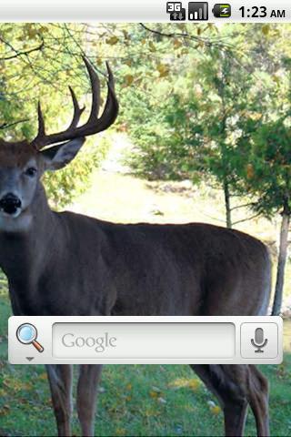 鹿狩りライブ壁紙