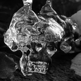 Ice Skull by Pierre Tessier - Nature Up Close Other Natural Objects ( skull, black and white, ice crystal, ice, frozen river,  )