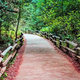 Muir Park by Carol Plummer - City,  Street & Park  City Parks ( california, path, trees, muir park, redwood )