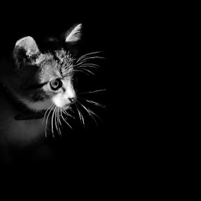 In the Dark by Ionut Harag - Black & White Animals (  )