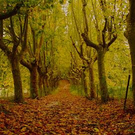 My way by João Vaz Rico - Landscapes Forests