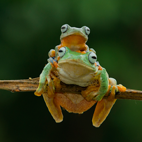Mom and Son.. by Ubayoedin As Syam - Animals Amphibians