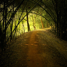Bamboo forest and the village road... by Kamelia Dandapat - Nature Up Close Trees & Bushes ( mud road, west bengal, village road, village, bamboo trees, trees, india, light and shade, renewal, green, forests, nature, natural, scenic, relaxing, meditation, the mood factory, mood, emotions, jade, revive, inspirational, earthly,  )
