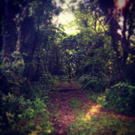 Went hiking today, did 7 miles! I saw this shot and it reminded me of a shot out of the secret garden or something mystical. I could get lost here and be happy. by Julie Dabour - Landscapes Forests ( hiking, pennsylvania, beautiful, nature, sun, jacobsburg, trails )
