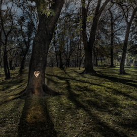 by Milos Vasic - Abstract Light Painting ( love, heart, park, tree, light )