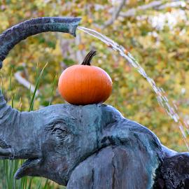 Elephant Pumpkin by Lin Fauke - Animals Other ( water, zoo, pumpkin, elephant, fall, fountain, leaves, halloween )