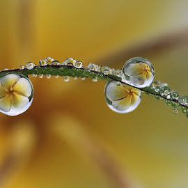 My dews by Dedy Haryanto - Abstract Macro