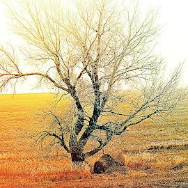 Sun kissed by Diane Merz - Landscapes Prairies, Meadows & Fields