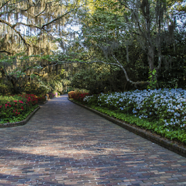 by Kenneth Anderson - Nature Up Close Gardens & Produce ( mcclay gardens, gardens, maclay gardens )