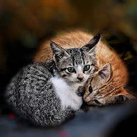 by Daniel Chang - Animals - Cats Kittens ( baby, young, animal )
