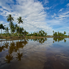 Village @ Perak by CK NG - Landscapes Prairies, Meadows & Fields ( reflection, rice field, village, coconut tree, perak )