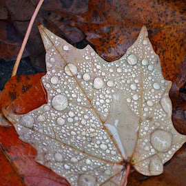 Autumn  by Lori Gasbarre - Novices Only Macro
