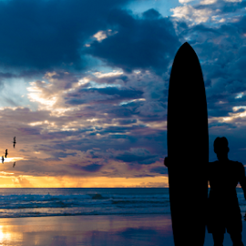 The longboarder by Alan Crosthwaite - Sports & Fitness Surfing ( vacation, surfing, surfer, sunset, sunsets, surfboard, summer, longboard, coastal )