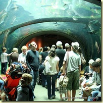 Underwater viewing tunnel in the Rainforest Dome at the California Academy of Sciences